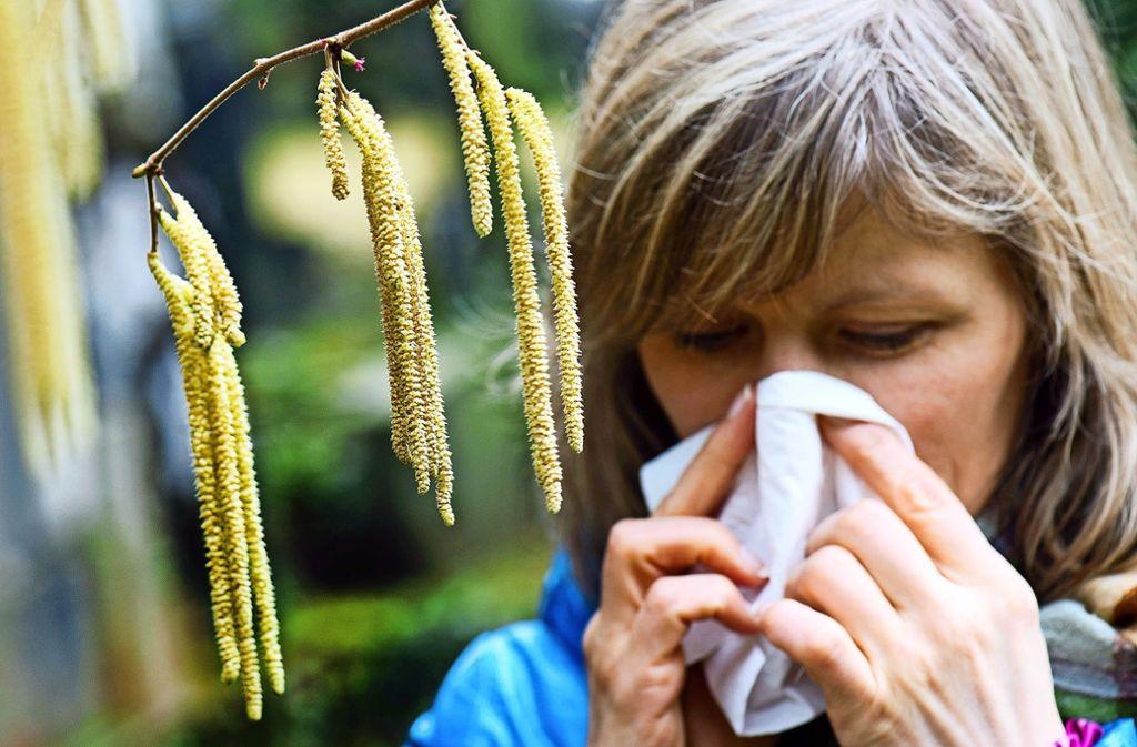 Die Pollen des Haselstrauchs und anderer Pflanzen dämpfen die Freude an der Natur. Foto: dpa