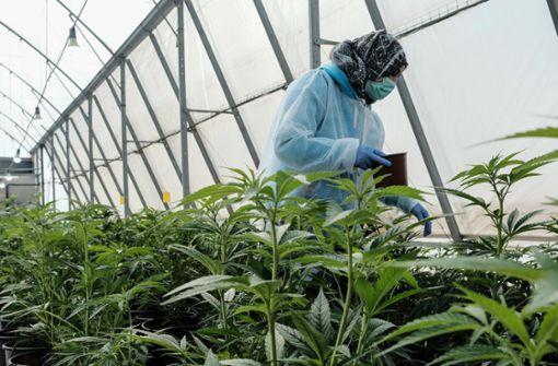 Zwei Jahre Cannabis auf Rezept: Zwischen Boom und Skepsis