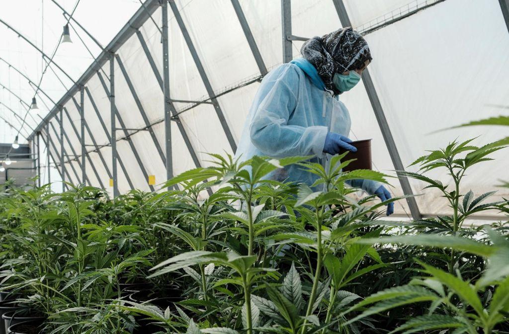 is zur Liberalisierung war medizinisches Cannabis in Deutschland eine Nische. Foto: ZUMA Wire